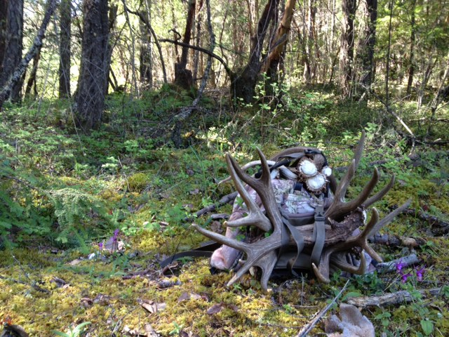 Shed Antlers In Southern Oregon Blacktail Deer Southern